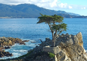 Monterey's world-famous 'Lone Cypress'